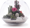 Floral terrarium with colored sand substrate